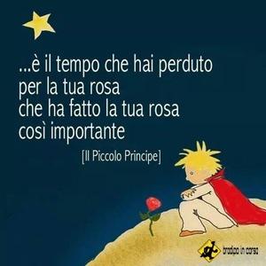 Piccolo principe rosa